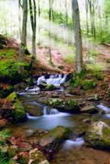 waterfall in forest liten by a sunbeams